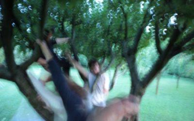 Cosa è lo Yoga degli Alberi