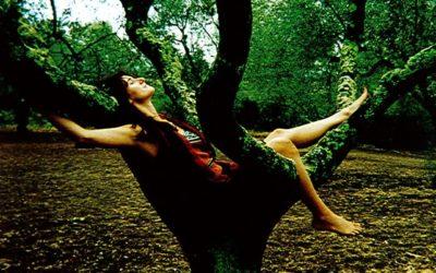 Webinar: Un albero mi ha insegnato a stare al mondo