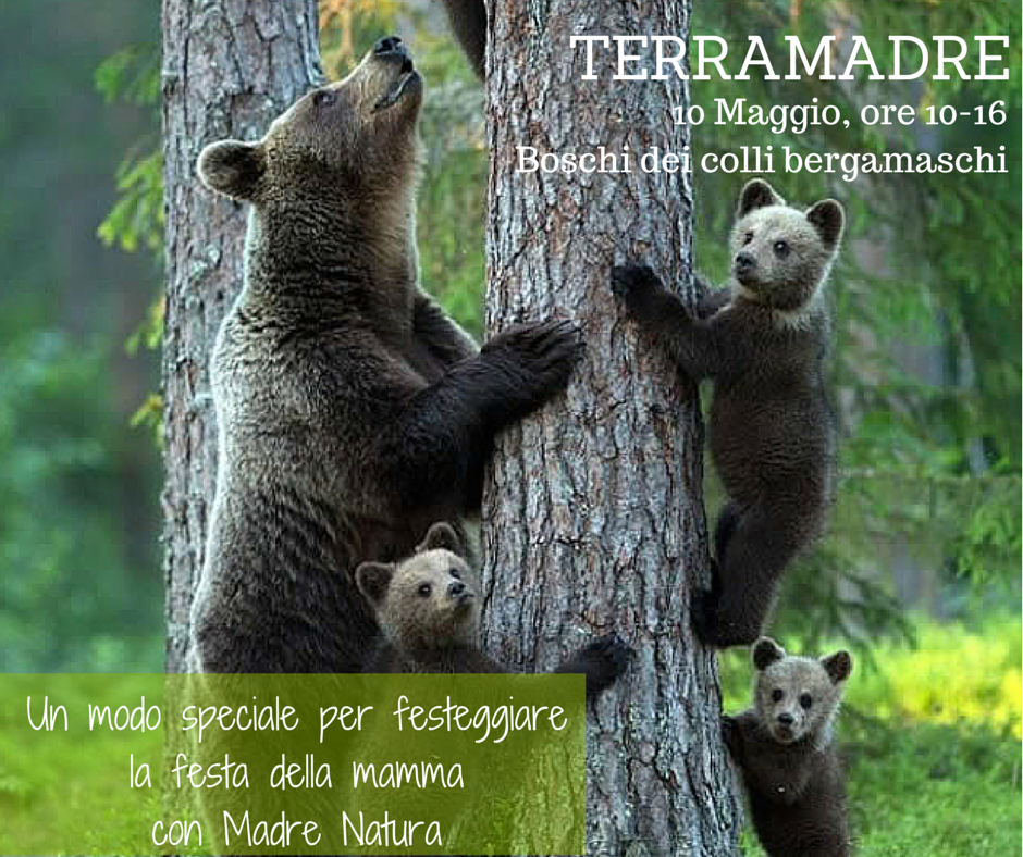 TERRAMADRE x wordpress