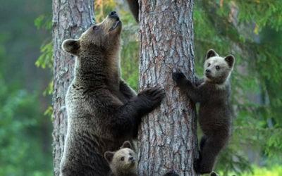 TERRAMADRE: festa della mamma in natura il 10 Maggio