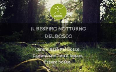 Il respiro notturno del bosco