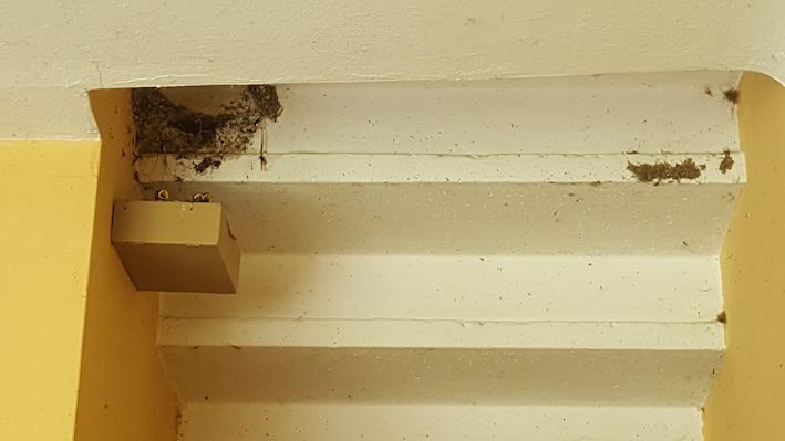 nido-rondine-caduto
