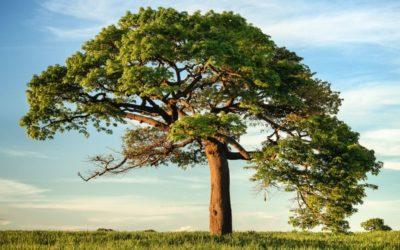 NATURE IS SPEAKING: Madre Natura chiama, risponderai?