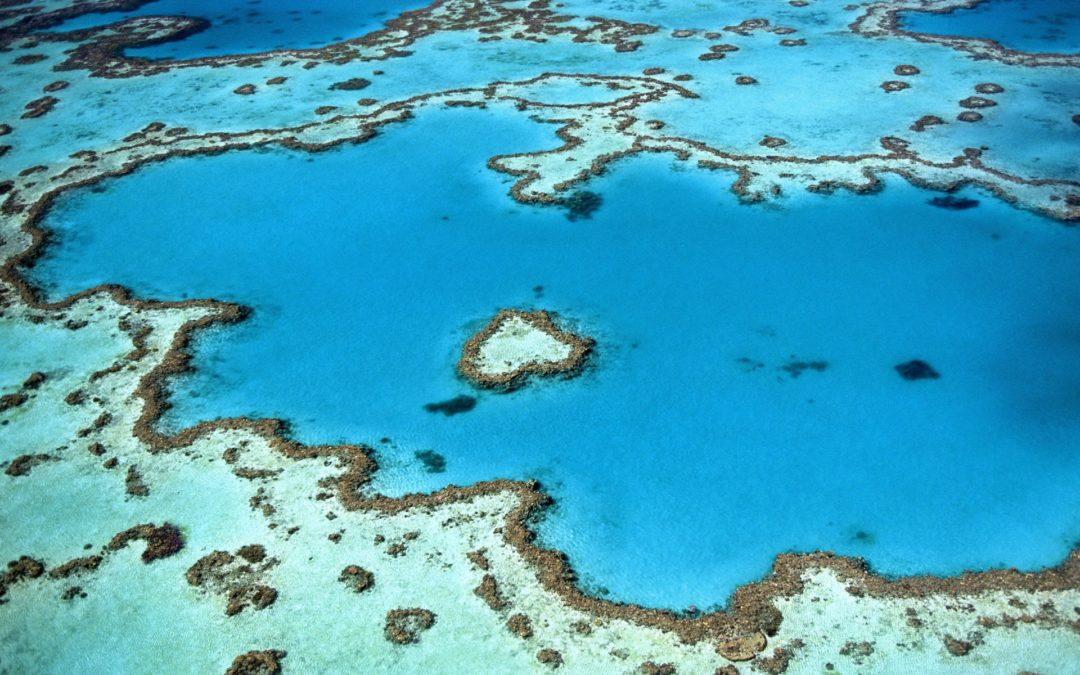 NATURE IS SPEAKING: Vedere il reef: voglio che rimanga nella mia bucket list.