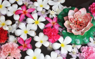 NATURE IS SPEAKING: La forza dei fiori.