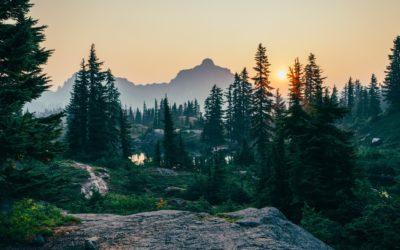 NATURE IS SPEAKING: il messaggio della foresta per la giornata mondiale contro la desertificazione