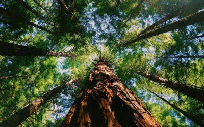 NATURE IS SPEAKING: Le sequoie, i dinosauri dei vegetali